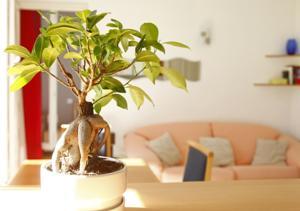 Apartments Matisse